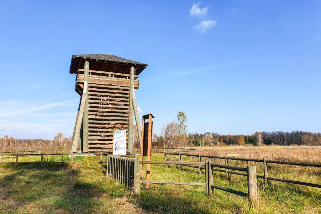 Orla wieża